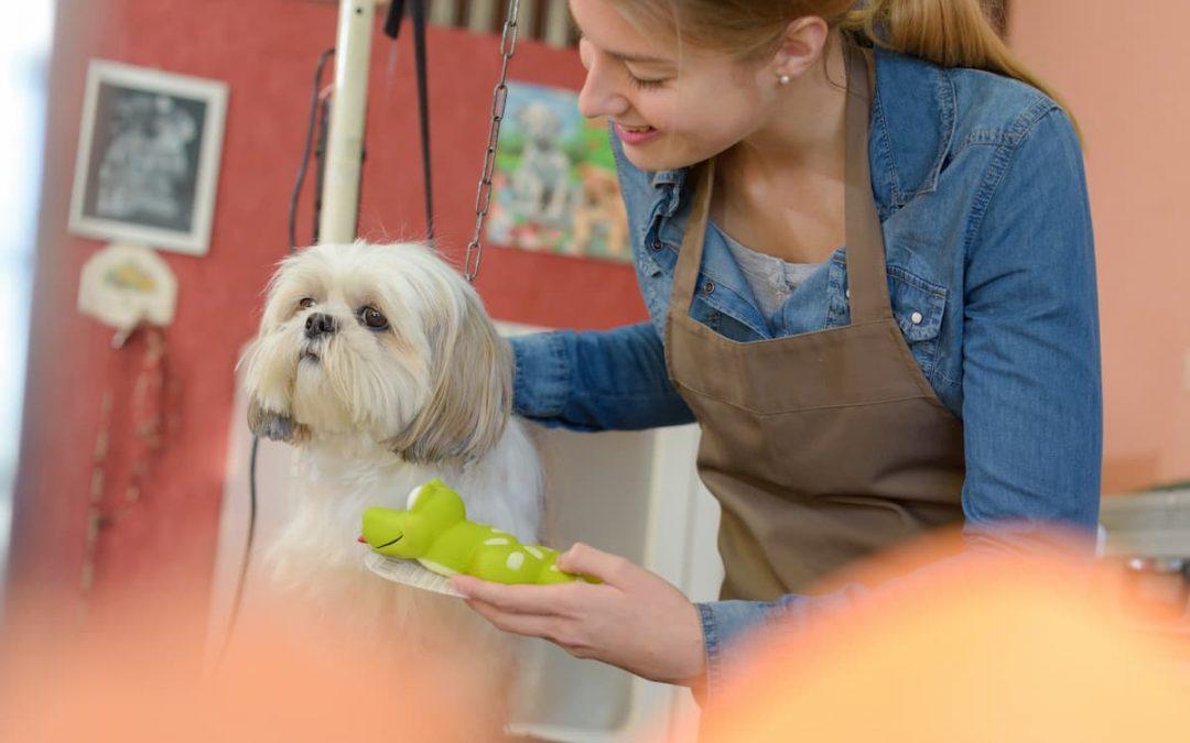 Check-List completo de banho e tosa para Pet Shop