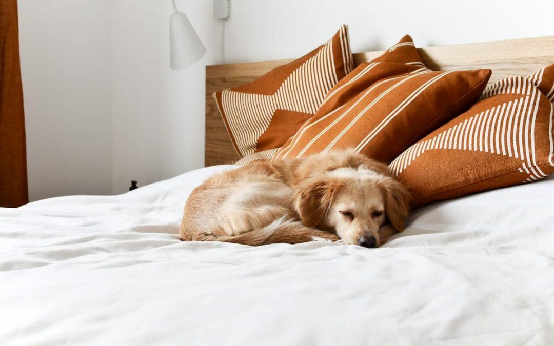 Descubra agora: Como montar um hotel para pets