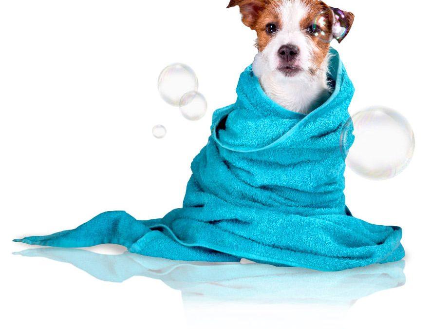Gestão de banho e tosa: como fazer em seu Pet Shop