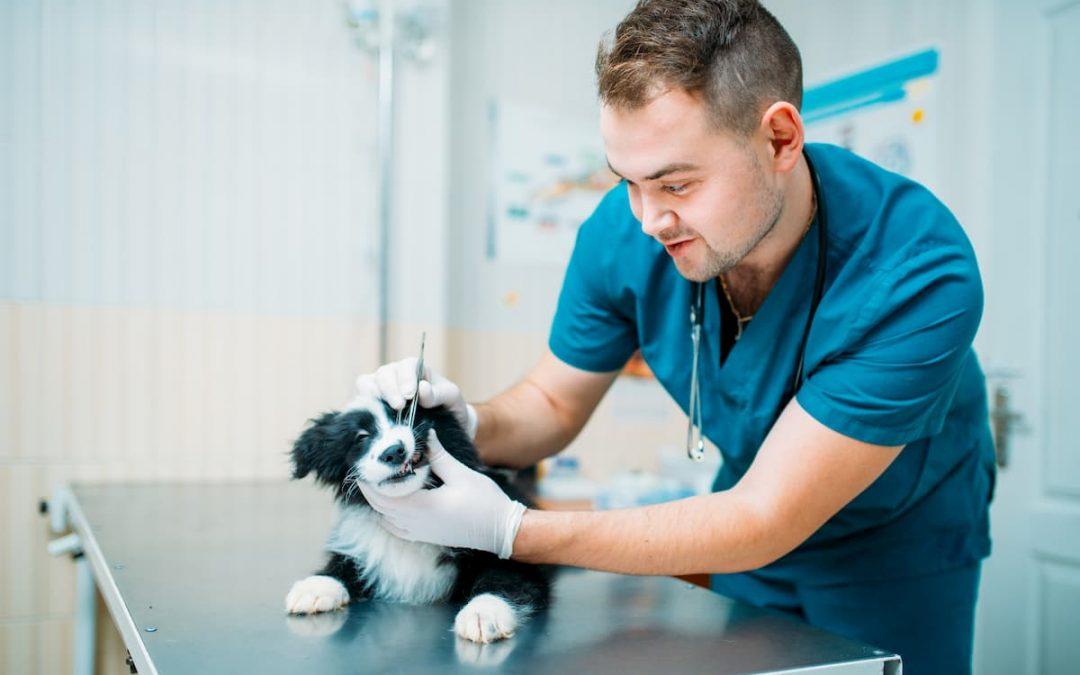 Clínica Veterinária: conselhos para quem está começando