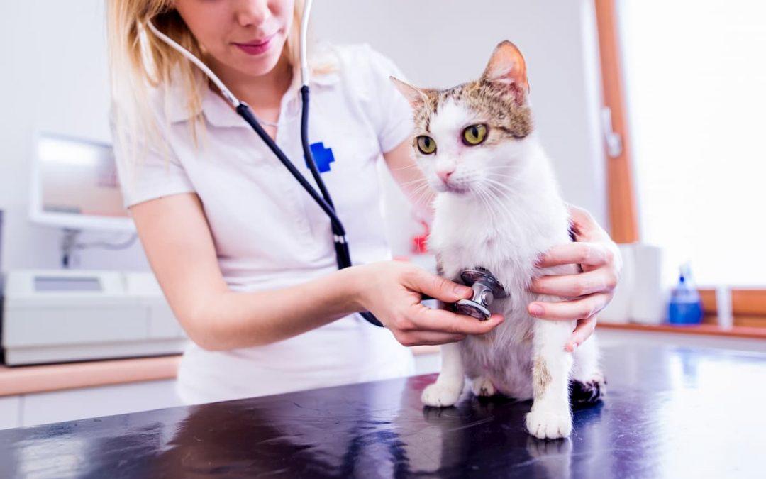 Como a tecnologia pode ajudar na gestão de sua clínica veterinária