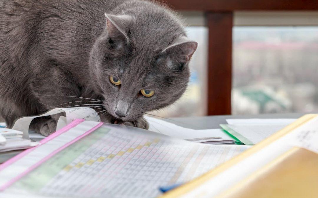 Contabilidade para Pet Shop: dicas de gestão