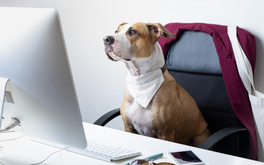Ferramentas de gestão: dicas de como usar em seu Pet Shop