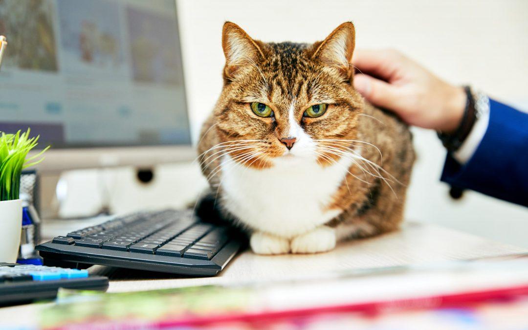 Escolha o melhor software para sua clínica veterinária com 5 dicas