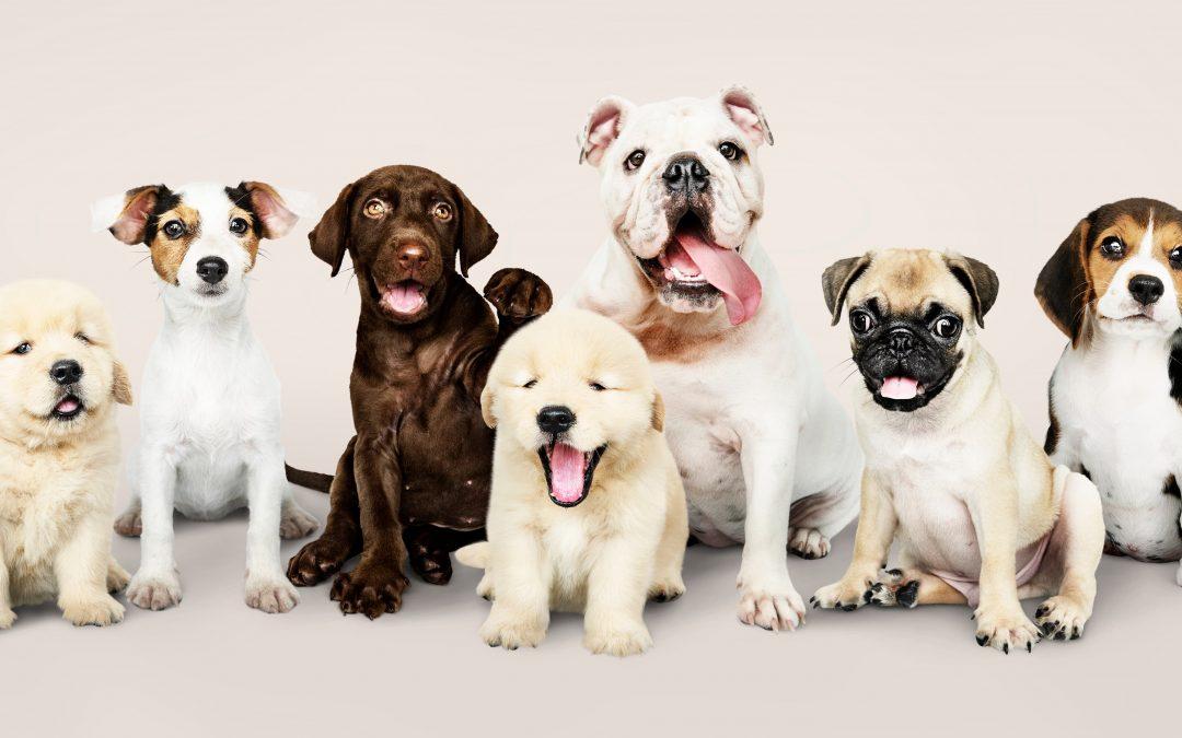 Fidelização de clientes para Pet Shop: Veja como fazer