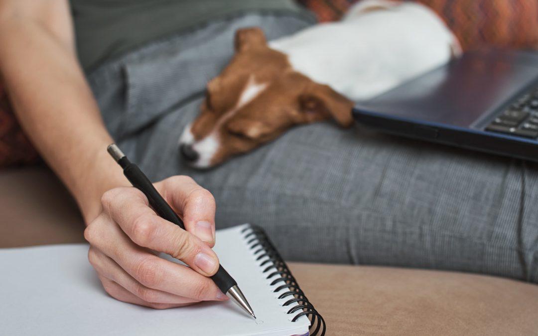 Conheça a importância da emissão de nota fiscal SAT para o seu Pet Shop